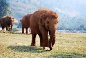 Elephant Nature Park Baby Elephant