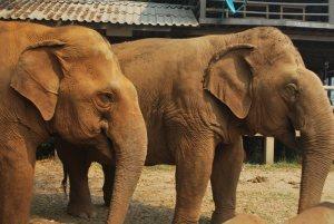 Elefanten ENP