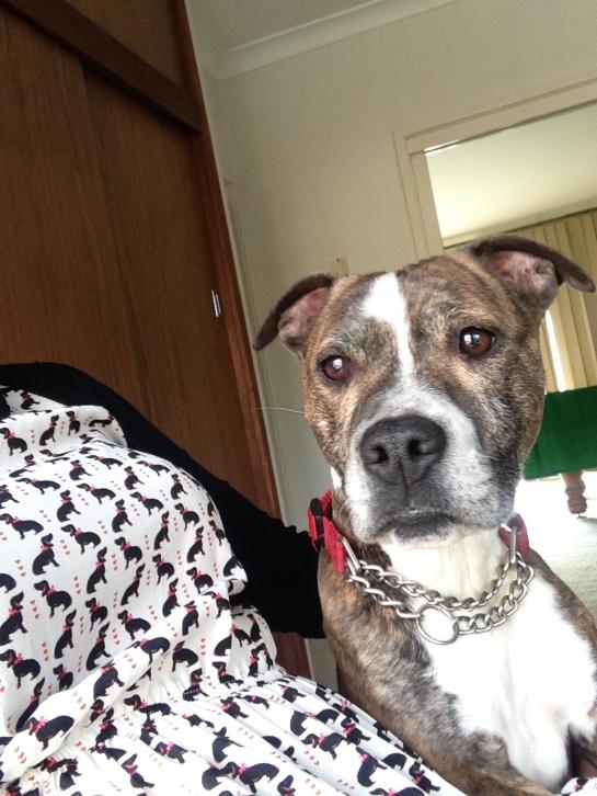 Pflegehund Evie